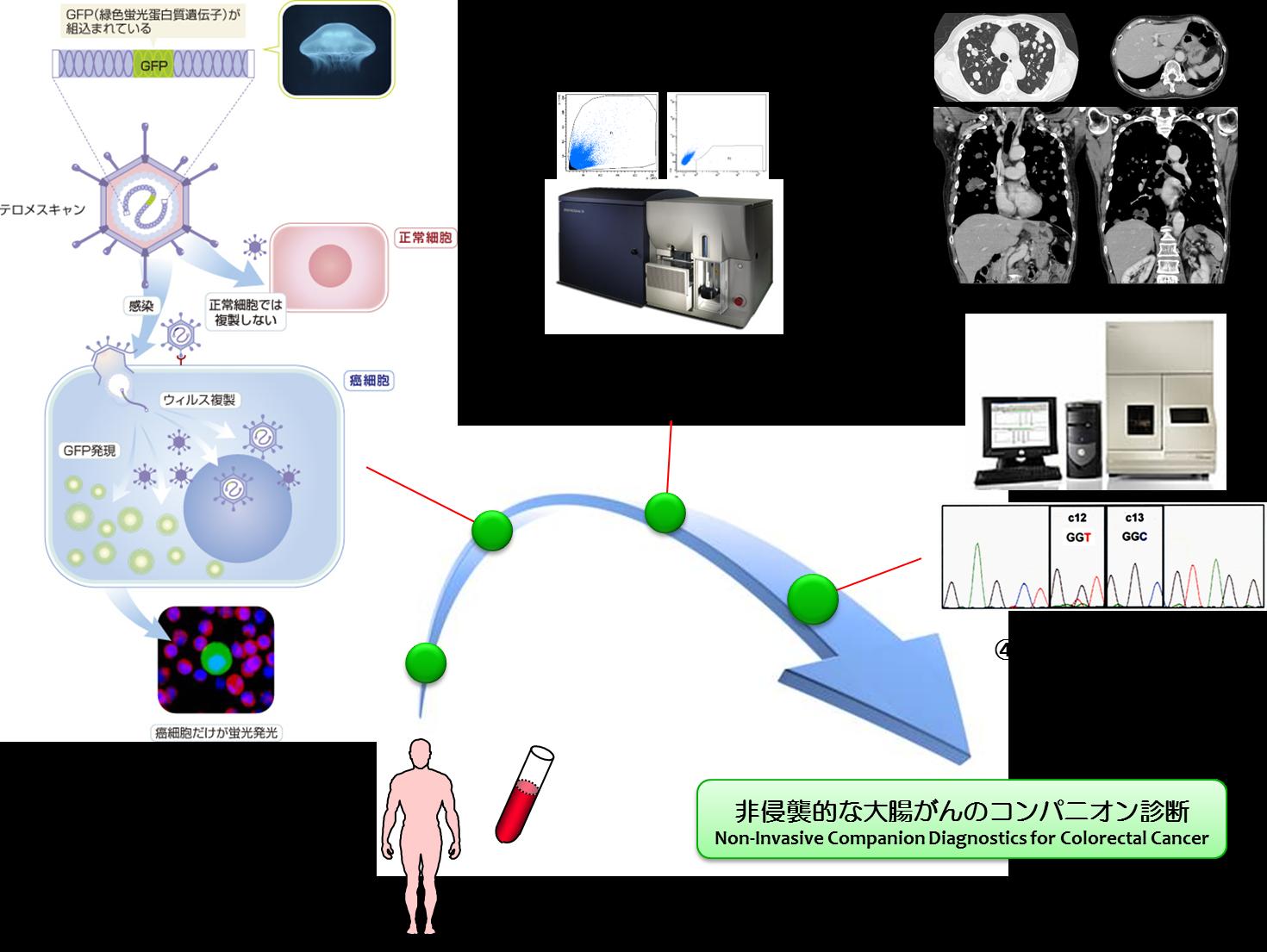 テロメスキャンを用いた血中循環がん細胞(CTC)からの非侵襲的コンパニオ... クラゲの蛍光タン