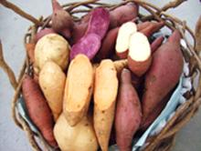 サツマイモ品種