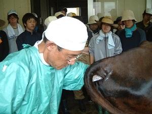 奥田学部長による直腸検査 奥田学部長による直腸検査 直腸検査実習 高知大学桜井先生による和牛の審